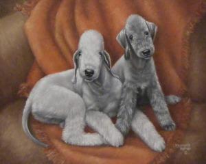 Bedlington Terriers | Meredith Rambo