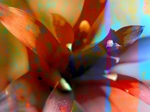 Flower_Petals-lr